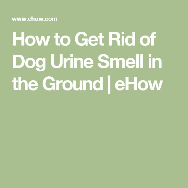 How to get rid of dog urine smell in the ground dogs for How to get rid of urine smell in bathroom
