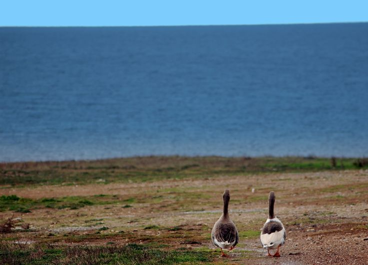 Two friends going for a walk. #Paros, #Greece, #Nature