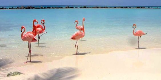 Flamingo Beach at Renaissance Aruba Resort & Casino, Oranjestad, Aruba