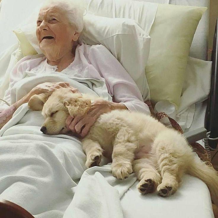 goldenlabrador goldensofinstagram golden puppyoftheday labrador pets cutepuppy cutepuppies puppyoftheday puppylife #puppycollective #dogg...