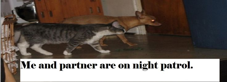 Why do dogs bark at night?
