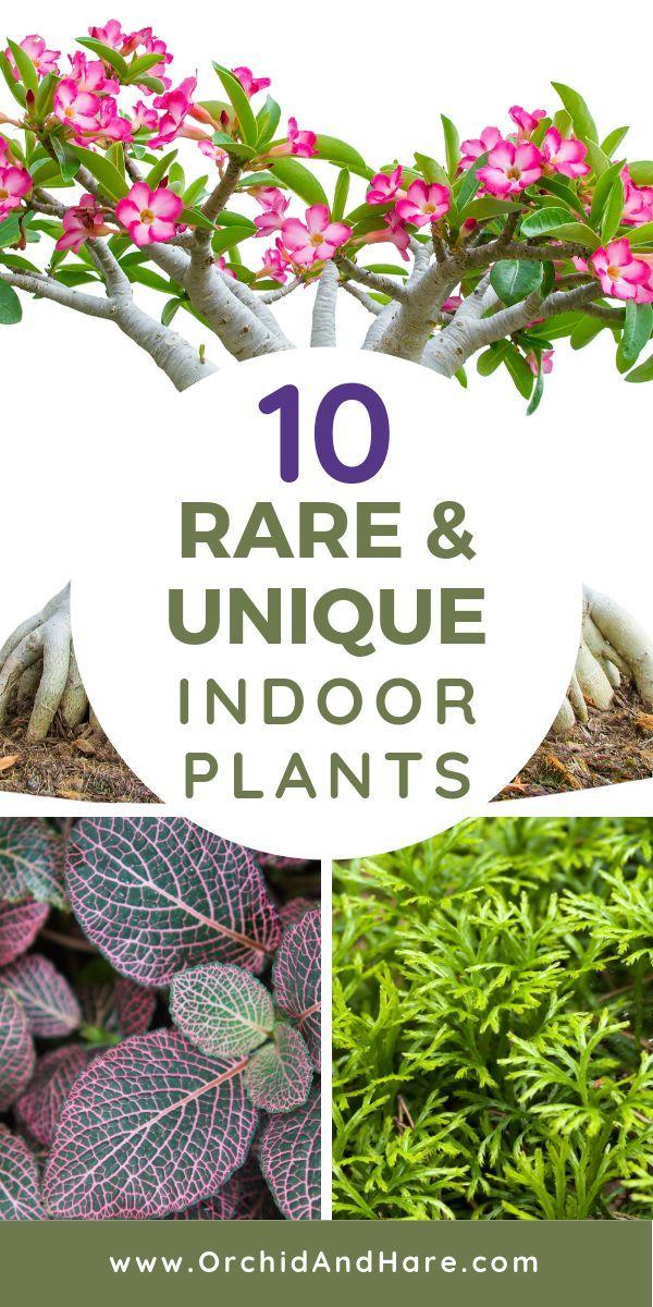 10 Rare Unique Houseplants You Will Love Includes Care Instructions Plants Houseplants Easy Plants