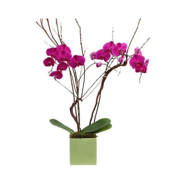 Purple & Magenta Orchid Flower Arrangement