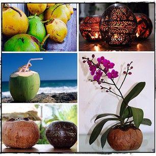 the humble coconut…drink it, carve it, plant it!