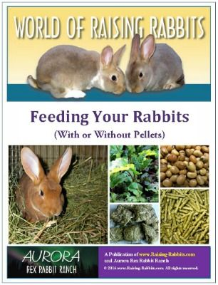 What do rabbits eat - learn a healthy variety of ways to feed rabbits. Gain confidence with caring for rabbits by knowing what rabbits should eat and how to feed