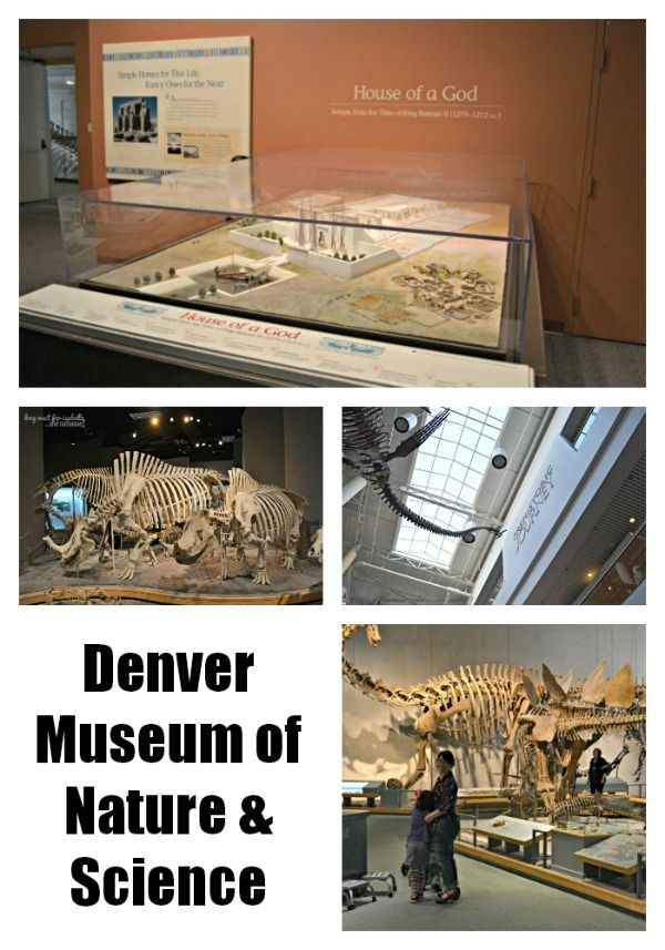 The Mile High Culture Pass gives you three days to explore many of Denver's top art and cultural museums, while the Denver CityPASS gives you access to three, four or five of Denver's most popular attractions for seven days.