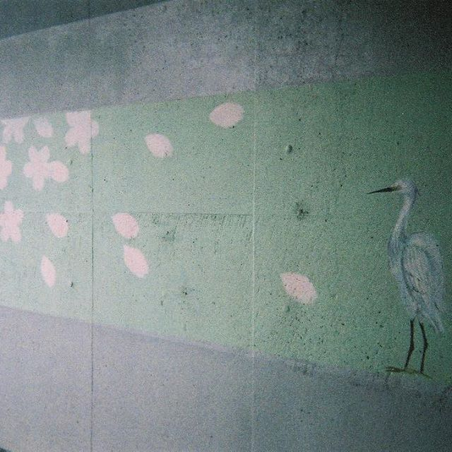 【boncutebon】さんのInstagramをピンしています。 《2016.10.22.Sun.← 「写ルンです」で遊ぶの巻Ⅱ . 多摩川ウォーキングで持ち歩きグルグル、パシャ(ϋ)/ . こちらは、トンネルの壁画。 淡いパステル調で季節が描かれてました。 . コレはきっと、春の絵🌸 . . #写ルンです#思い出は色褪せない#懐かしい#フラチナリズム#CM#CD化できる#面白い#フィルム#film#デジタルで見るとまた違う#やっと現像#現像するまでのお楽しみ#今度のランでも持って走ろうかな#すぐフィルム無くなる😭#どんだけー#お試し#トンネルの壁画#壁絵#wall#パステルカラー#好きな雰囲気#🌸#桜#鳥#春#多摩川#感謝#感激#THANKYOU#10月の写真》