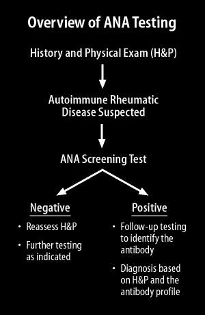 Anti-nuclear Antibody