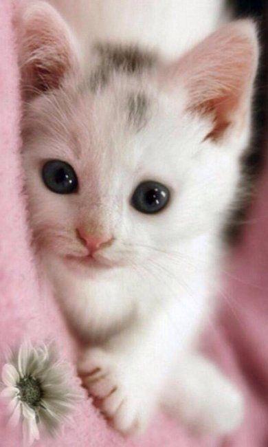 Pink..♥ Hello cutie pie!