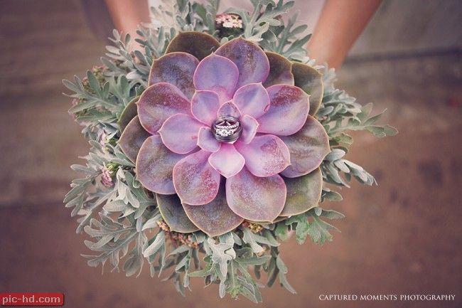 صور بوكيه ورد صور بوكيهات ورد جميلة اجمل صور بوكيه ورود Succulent Wedding Succulent Bouquet Succulent Wedding Decor