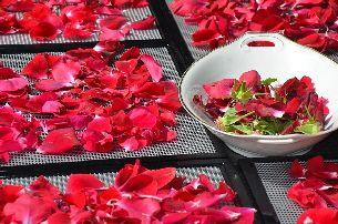 Rozenblaadjes drogen / Dehydrating rose petals