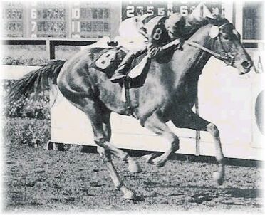 Beginning her career under Eddie Arcaro, Busher won 3 stakes in 1944 to win Champion 2 yr old.  WWII put a hold on racing until May of 1945, so Idle Hour sold racing stock and Louis B. Meyer bought himself another champion for $50,000.  She won him 9 stakes races that year.  2 years later, she retired due to injury, Meyer auctioned his favourite mare, along with his other 60 racers; he had lost heart for the sport when she couldn't recover.
