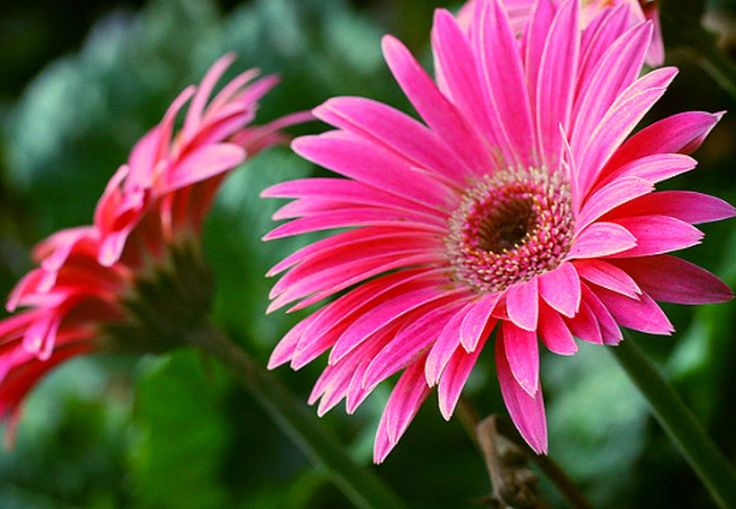 "#1 GERBERA DAISY FOR YOUR LAUNDRY ROOM Gerbera daisy removes benzene and formaldehyde toxins found in laundry detergents. Add this purifying plant to your laundry room. ""The light loving Gerber Daily is another beautiful set of houseplant that helps you improve indoor air quality in your home and workplace. Gerber Daisy also known as African Daisy is brightly colored flowering …"