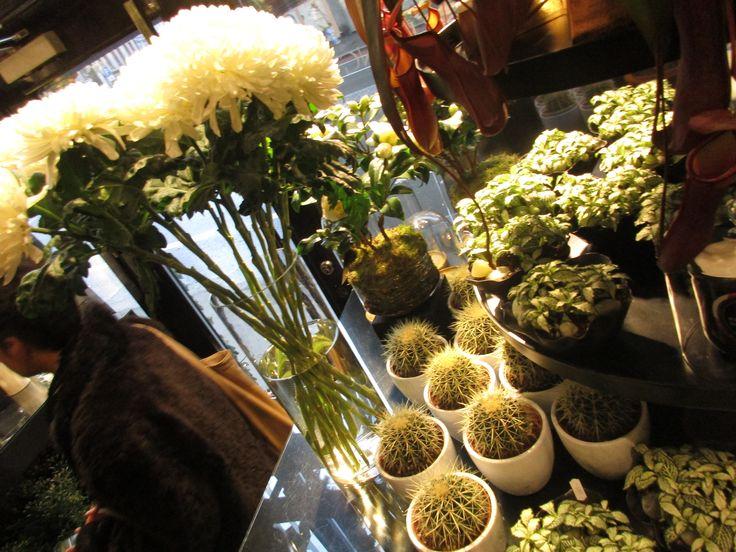 Kaktus og blomster i glassvase