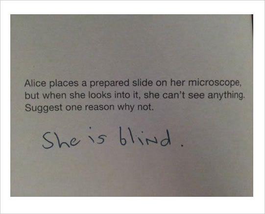 primary school exam funny answers
