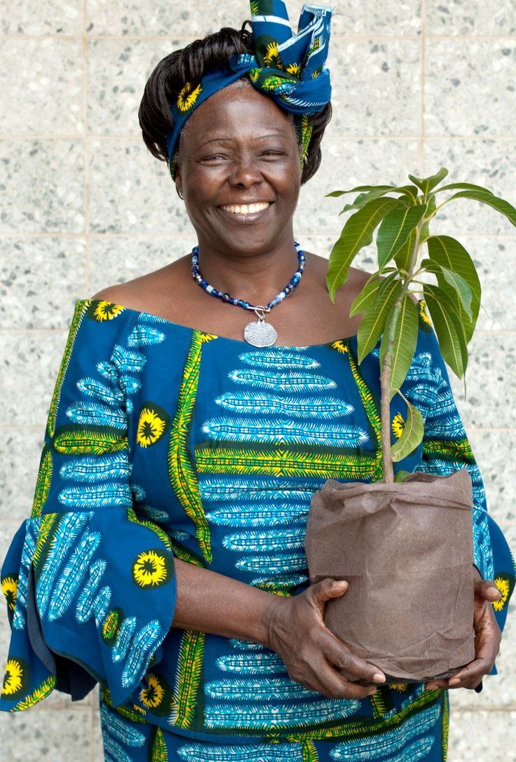 wangari maathais nobel peace prize acceptance Wangari maathai (born wangari the green belt movement became highly visible after maathai won the nobel peace prize and and here is her nobel prize acceptance.