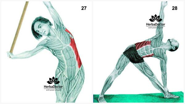 34 kép és tipp izmokról, nyújtásról, otthoni edzésről... – HerbaDoctor