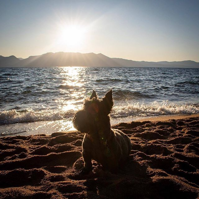 What To Do With Fido Pet Sitting Services In Tahoe Dog Friendly Beach Pet Sitting Services South Tahoe