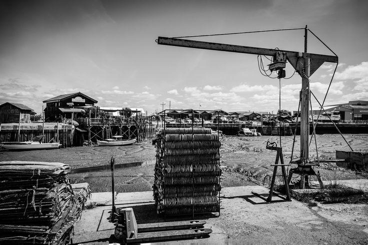 Oyster Arcachon Bay - France