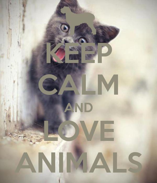 Keep calm and love animals!!!!