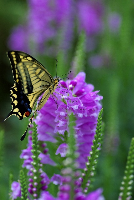 34 Best Images About Flowers That Attract Butterflies On Pinterest Orange Flowers Gardens And