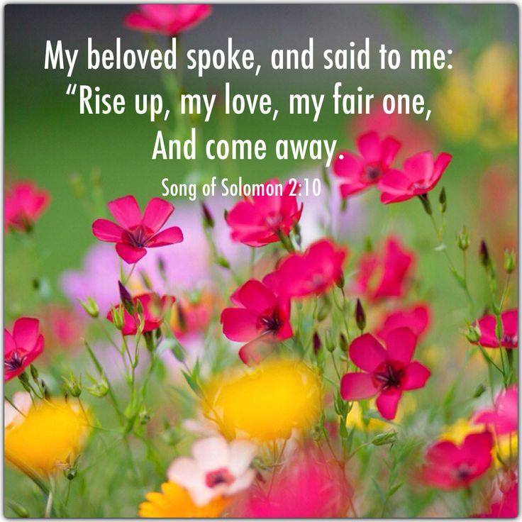 62 Best Song Of Solomon Images On Pinterest Bible Scriptures