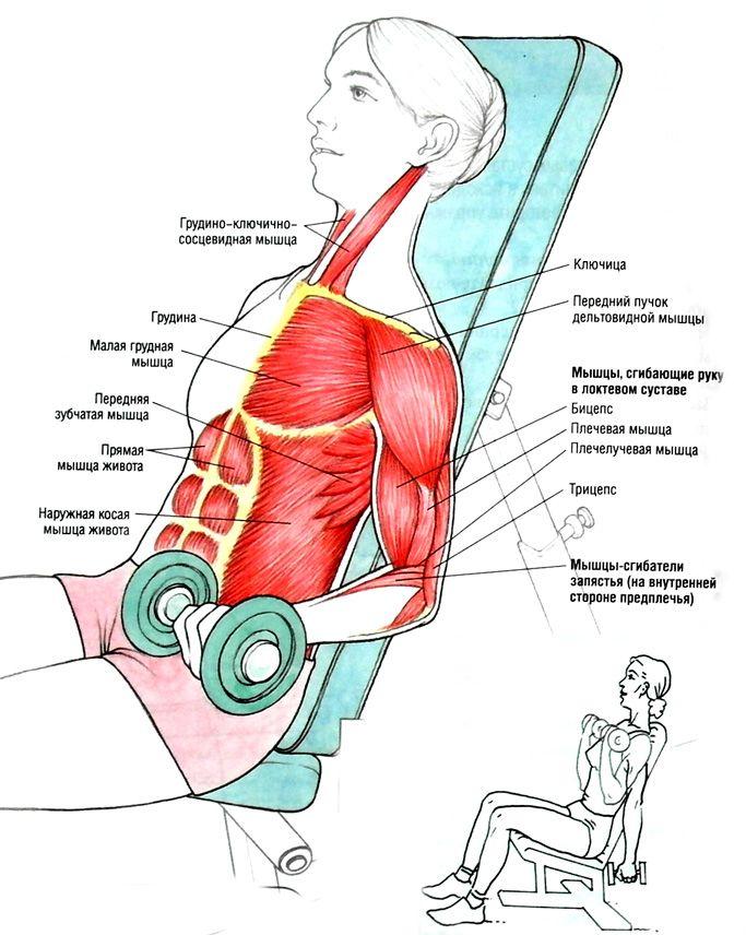 Упражнения для рук (для женщин) — SportWiki энциклопедия