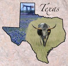 """Texas  Entered the Union: December 29, 1845 (28)Capital: Austin State Nicknames: Lone Star StateState Motto: Friendship State Mammal: Texas LonghornState Tree: Pecan State Small Mammal: ArmadilloState Bird: Mockingbird State Song: """"Texas, Our Texas""""State Flower: Bluebonnet Origin of Name: from a Hasinai Indian word, """"Tejas,"""" which means friends or allies. State Forests: 5 • State Parks: 120 Famous for: Houston Space Center, Gulf Coast resorts, The Alamo, oil, rodeos"""