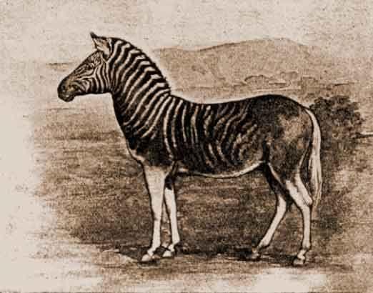 Extinct And Ancestor Animals – Fondos de Pantalla