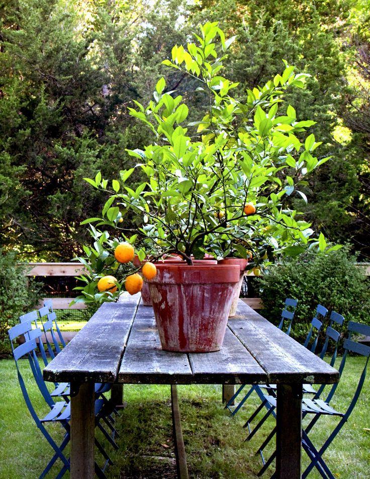 Frutíferas em vasos. www.casaecia.arq.br Cursos on line: Design de Interiores - Paisagismo e Jardinagem