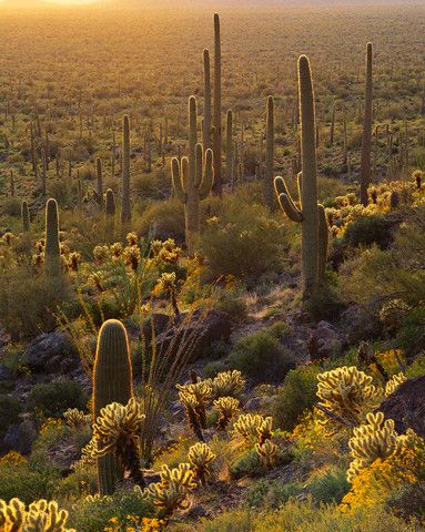 The Mojave desert. Definitely one of the most beautiful natural environments in America.