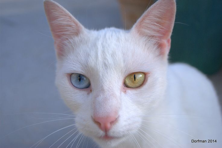 White Cat / David Bowie