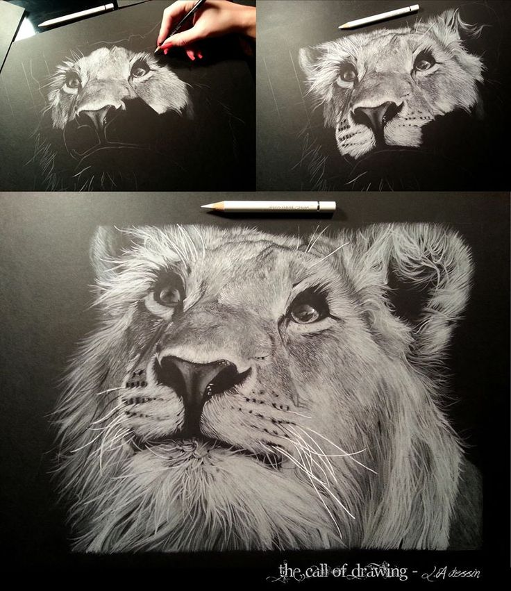 Lioness by Lorine Angelmann White Pencil on Black Paper