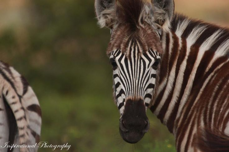 Photo taken on Amakhala Game Reserve by Ranger Kyle Ansell