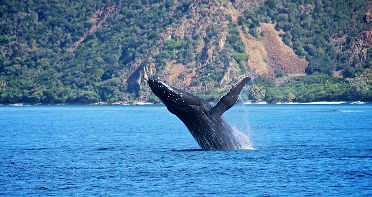 Whale in the Prony Bay