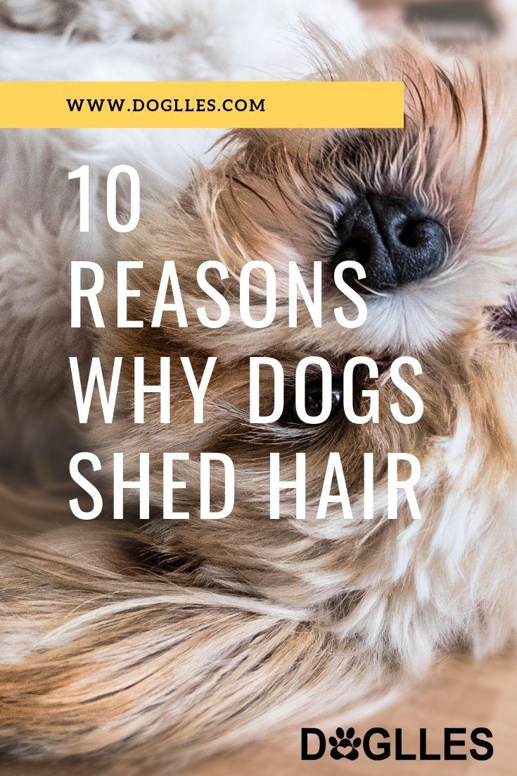 Doglles Com Nbspthis Website Is For Sale Nbspdoglles Resources And Information Dog Shedding Dog Health Dog Advice