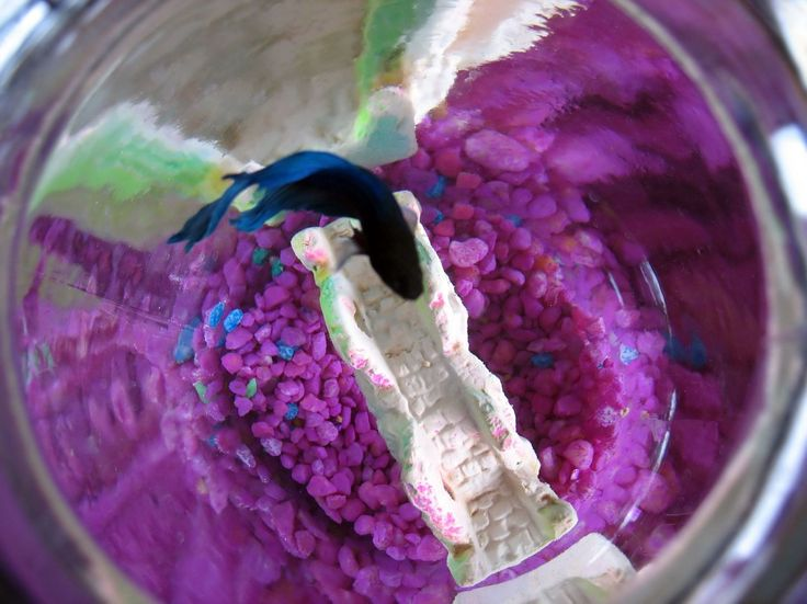 111 best betta fish tanks images on pinterest for How to clean a betta fish bowl