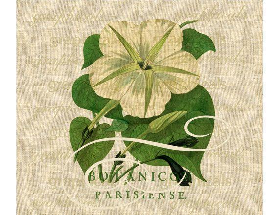 Fleur de gloire du matin Paris éphémères numérique Télécharger transfert d'image sur toile de jute tissu papier oreillers découpage cartes n° 612