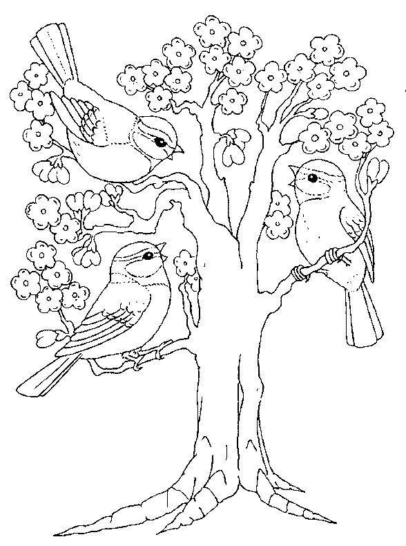Bluhender Baum Und Vogel Coloriages De Printemps Baum Bluhender Coloriages Printemps Und Voge Malvorlagen Fruhling Malvorlagen Tiere Baum Zeichnung