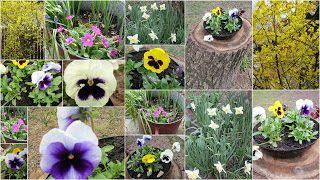tavaszi virágos :-)