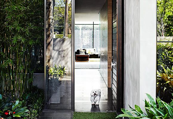 """Real Living: Harry, a Shih Tzu X Maltese, greets visitors to the modern Malvern home, characterised by its easily maintained grey rendered brick. This is softened by a dark-stained walnut timber front door and panelling above, which gives a sense of grandeur and height. Glass was tinted at the front for privacy. """"It works beautifully and was one of the best decisions,"""" says homeowner Tracy Strange."""