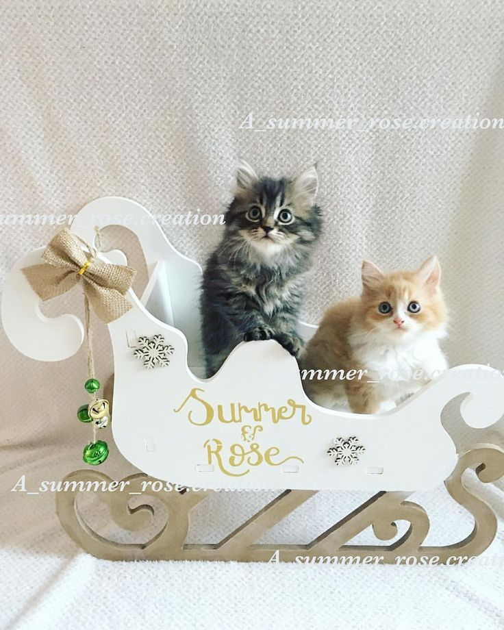 18 Likes, 3 Comments - @a_summer_rose.creation on Instagram: Christmas Eve sleigh, Christmas Eve box, gift for cat lovers, cute kittens, kittens, Santa's sleigh, personalised Christmas Eve box, Christmas Eve, cat gift, cat box, Christmas home decor