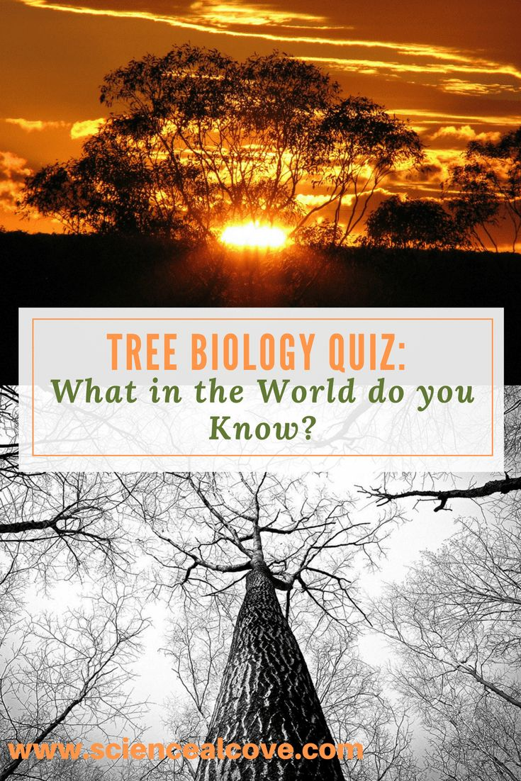 Take this quiz geared for kids or adults.  Perfect for teachers looking for activities for tree or leaf unit of study.#trees #treescience #sciencequiz #treequiz