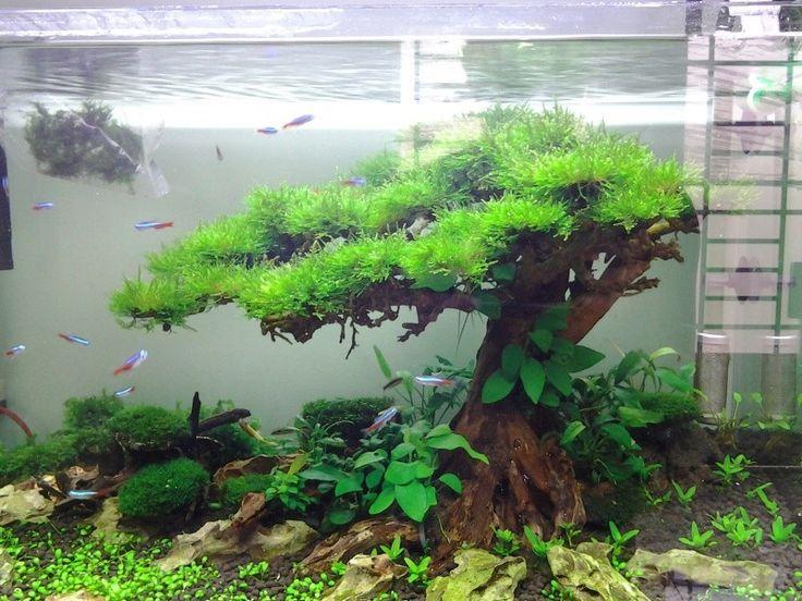 aquarium driftwood tree