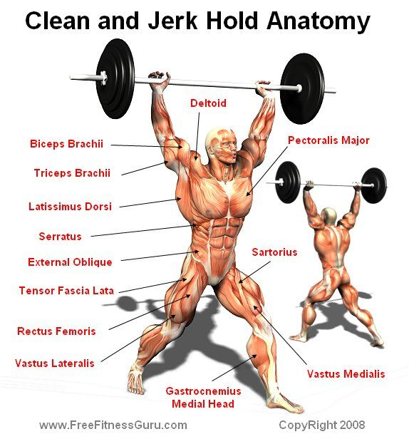 clean and jerk anatomy