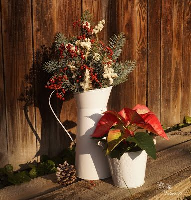 Страна декора и цветов: Пуансеттия - Рождественская звезда