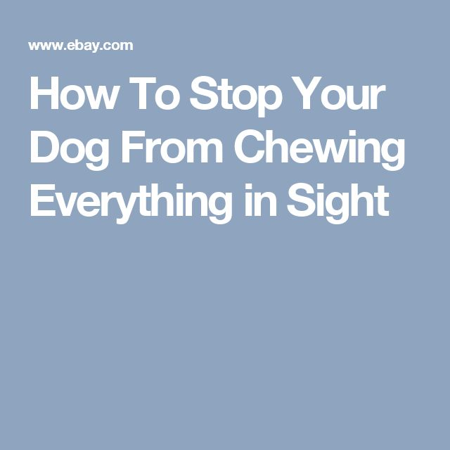 1000 Ideas About Stop Dog Chewing On Pinterest Dog Chews Your Dog And Dogs
