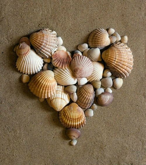 cute idea for all the shells collected over the years. You could attach to a canvas for display purposes