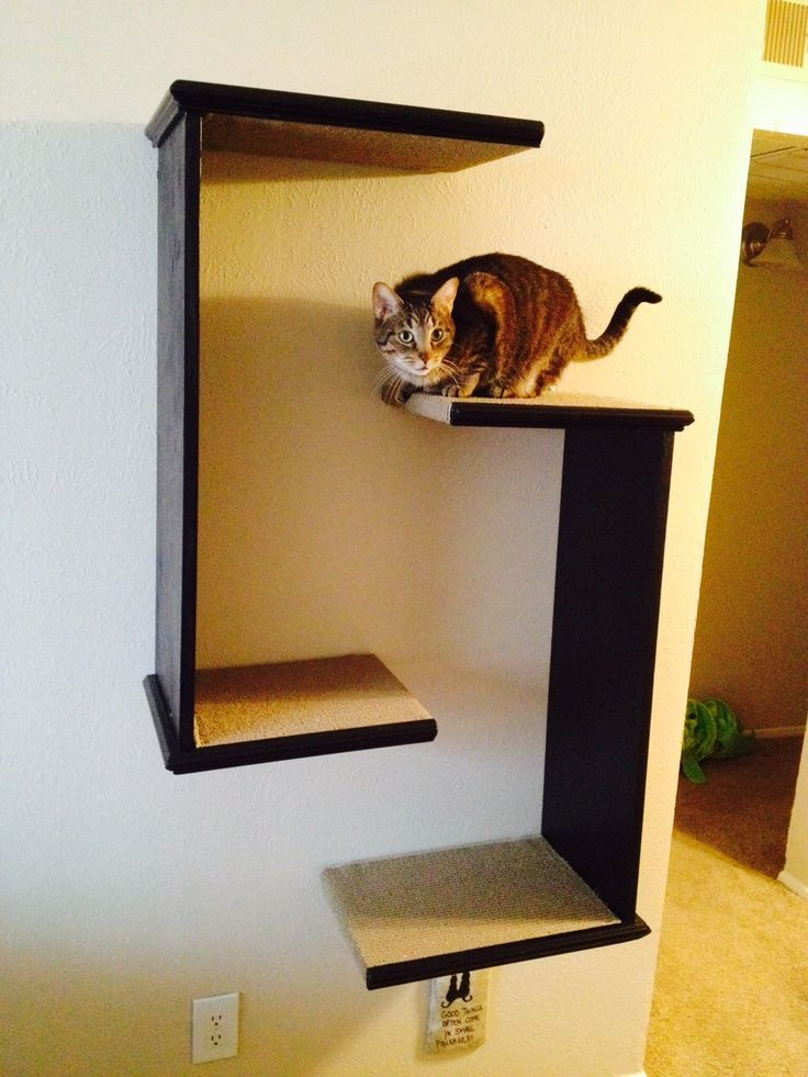 17 best ideas about cat shelves on pinterest cat wall for Bookshelf cat tower