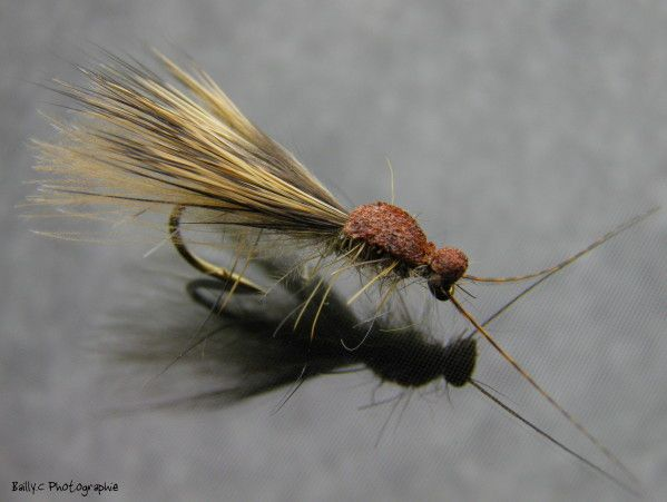 Interesting elk hair caddis variant. Could also serve as a flying ant.